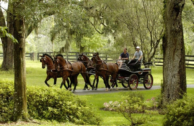 Chester Weber four in hand on his 150cm Leon II Training carriage in Florida